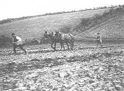 A Farming Diary For 1885